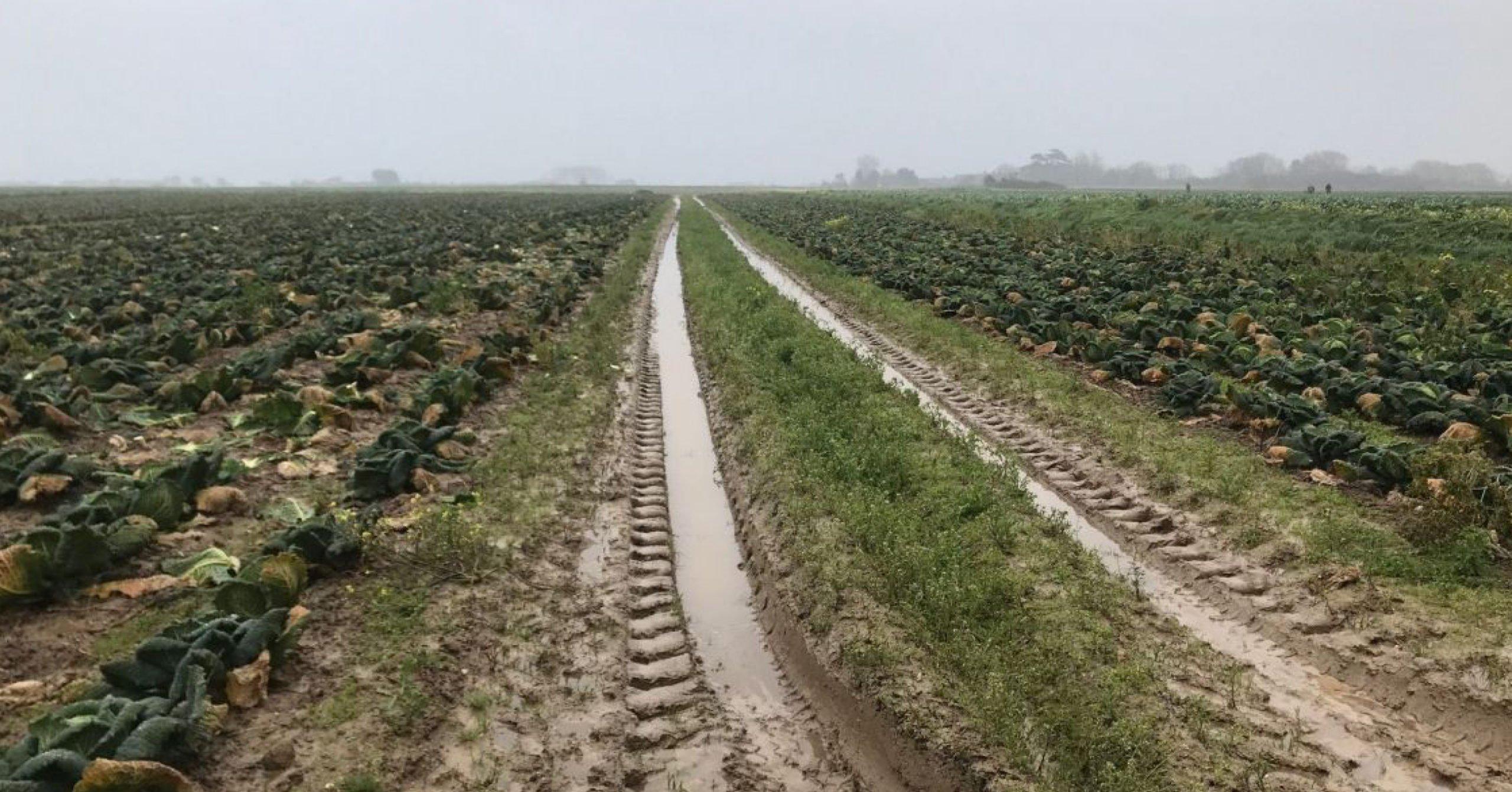 Reconnaissance de calamité agricole [Pluie et inondations]