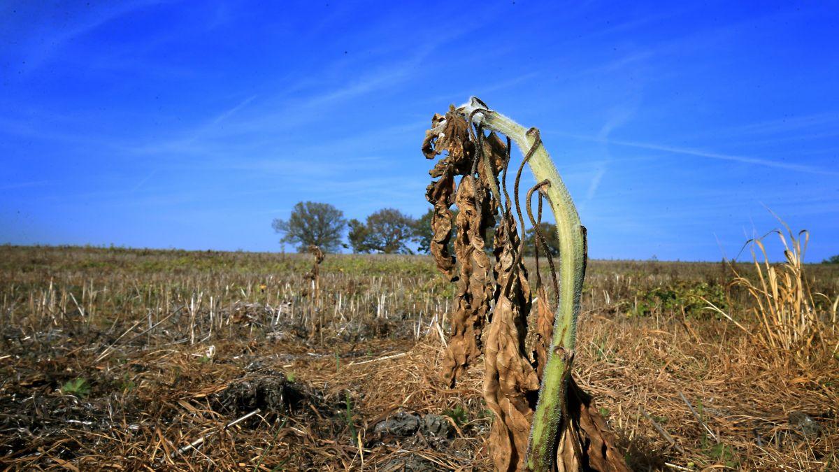 Reconnaissance de calamité agricole [Températures élevées]